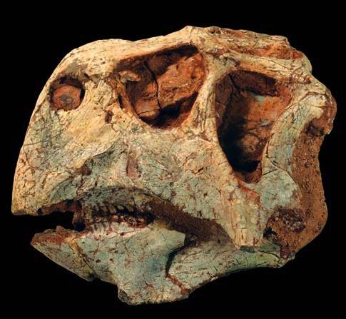 [Psitacosaurusmajor.jpg]