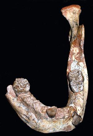 Mandíbula fosilizada de 160.000 años hallada en Marruecos. (Foto: PNAS)