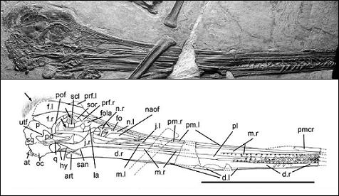 Gegepterus changi